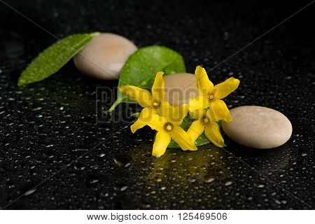 Pebbles And Yellow Flower On Black With Water Drops