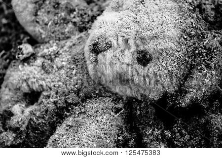 Close up head of wounded teddy bear who lies in a pile of ash