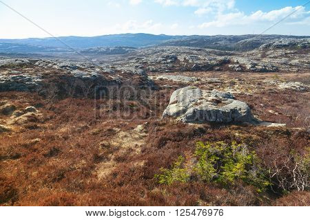 Norwegian Landscape With Rocks And Red Moss