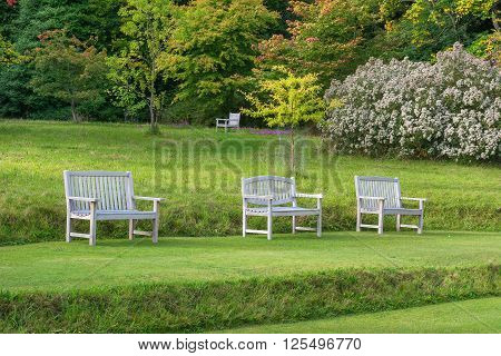 Row of wooden benches with attractive trees in the background