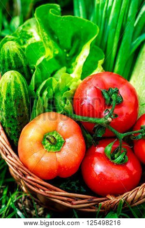 Fresh Vegetables In Weaved Basket