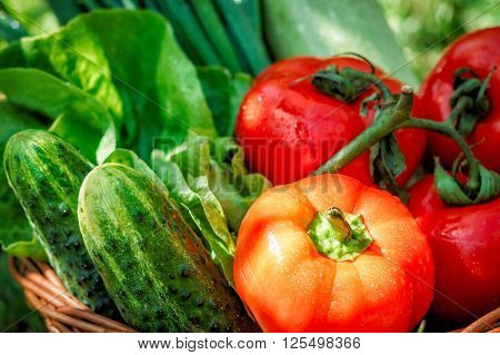 Fresh Vegetables In Weaved Basket