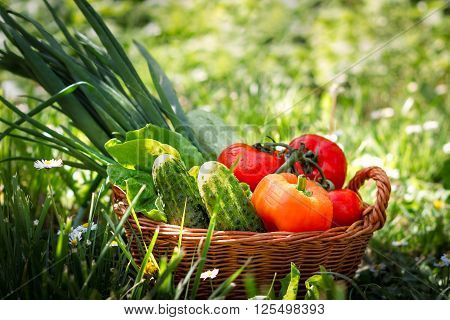 Fresh vegetables in weaved basket in grass with daisies and green background. Copy space