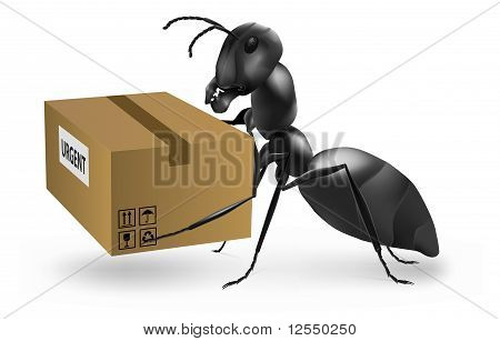 Ant Carry Urgent Post Package