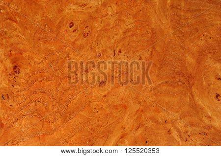 Elm Root Texture
