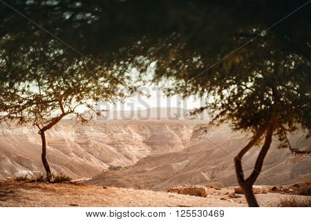 View From Oasis On Negev Desert
