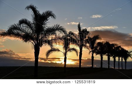 Rural Landscape with Palm Trees at sunrise