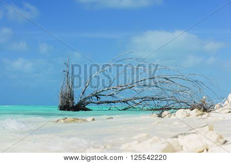 sand of beach caribbean sea. trees snag on Caribbean sea beach.