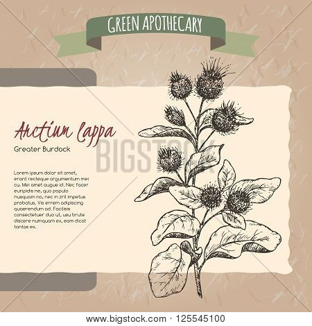 Arctium lappa aka greater burdock sketch. Green apothecary series. Great for traditional medicine, cooking or gardening.