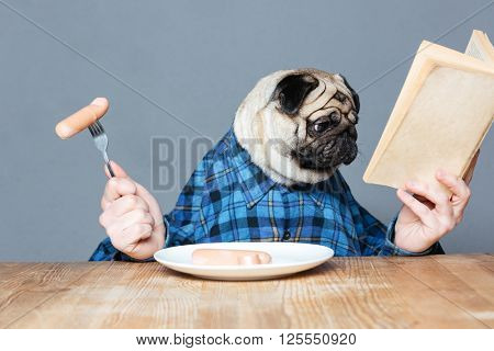 Concentrated man with pug dog head in checkered shirt  eating sausages and reading book over grey background