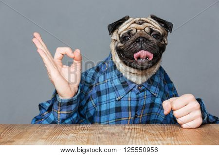 Man with pug dog head in checkered shirt sitting and showing ok sign over grey background