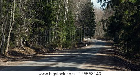 Road Fleeing Into The Distance In  Spring Forest