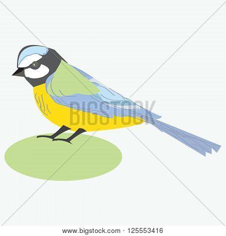 Tit bird. Titmouse. Vector illustration of a titmouse bird isolated on white background.