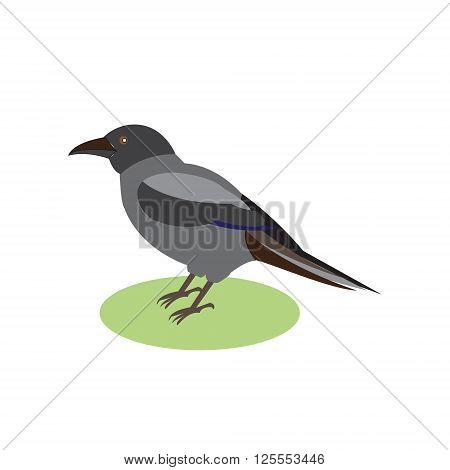Black Raven a magical bird vector illustration of a black crow