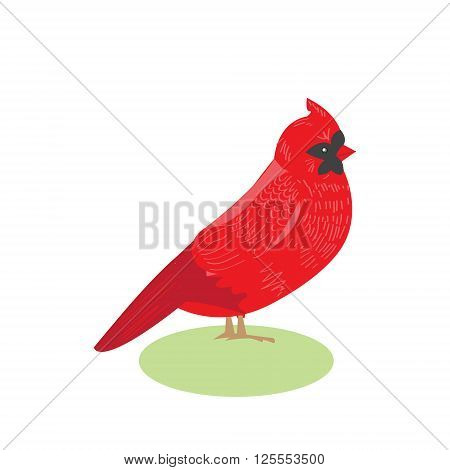 Bird red cardinal vector illustration of a beautiful bird red cardinal