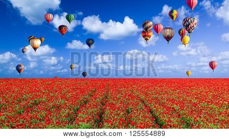 Colorful hot air balloons floating over a huge field of red corn poppies