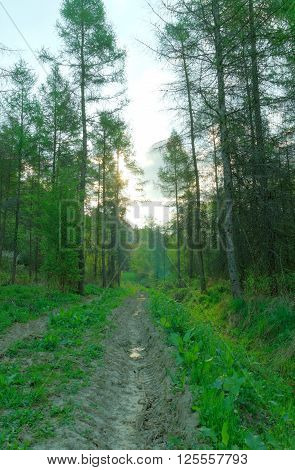 Forest muddy path road outback with green trees and sun