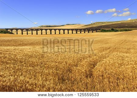 Summer rural landscape: railway bridge on the wheat field.Apulia.ITALY.Hilly landscape with a golden wheat field crossed by a railway bridge.