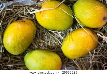 Delicious Alphonso mangoes packed in straw. These are a staple food for Indian summers and is among the best varieties of mango