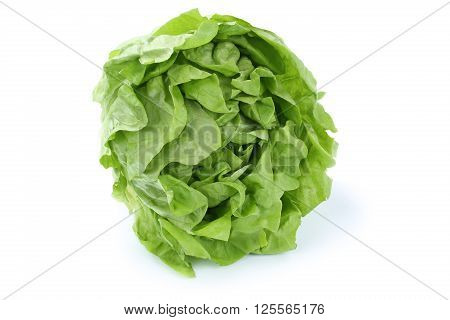 Head Cabbage Lettuce Vegetable Isolated On White