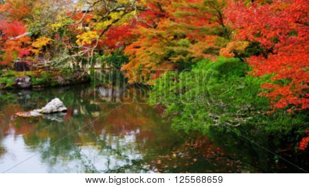 Blurred Abstract Of Colorful Autumn Leave