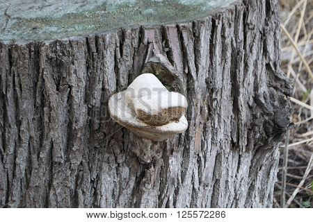 The Fungus Parasite On A Tree