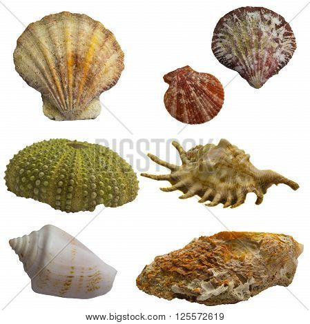 Seashell Collage Pack