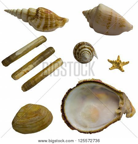 Collage of seashells isolated on white background