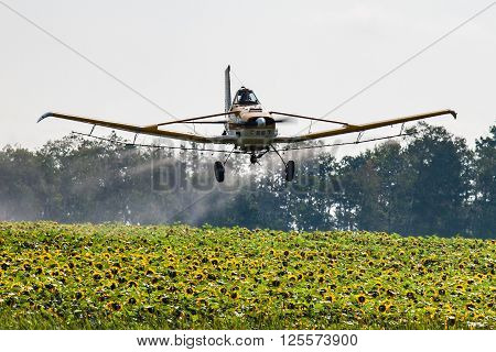 A low flying airplane sprays a field of sunflowers with chemicals.