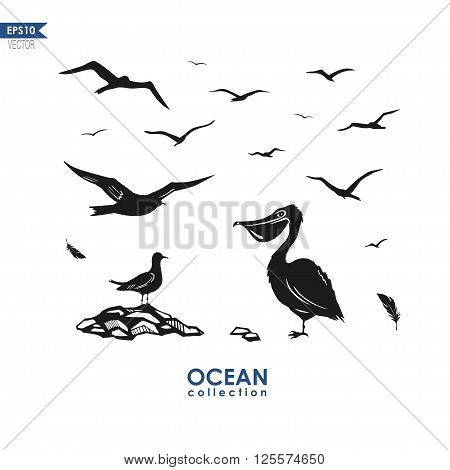 set of vector silhouttes of sea birds: seagulls, pelican ant other