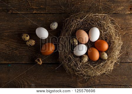 Fresh chicken and quail eggs in a nest on a wooden rustic background