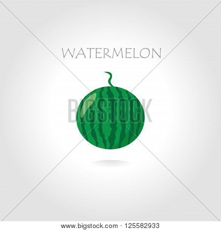 green watermelon vector illustration with text tittle