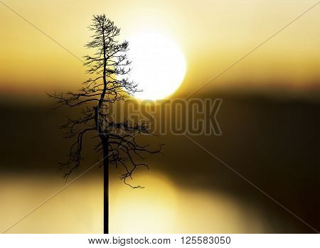 silhouette of tree on yellow and orange sky at sunset