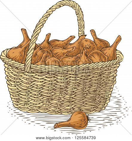 Wicker Basket with Bulb Onion. Isolated on a White Background