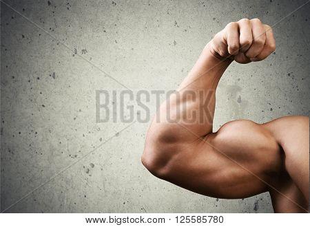 Human Muscle.
