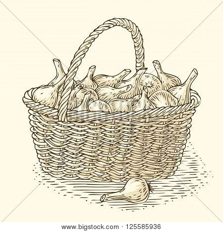 Engraving Wicker Basket with Bulb Onion. Isolated on a Beige Background