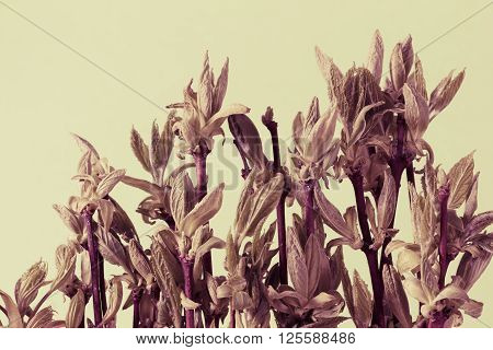 floral natural background of foliage and branches closeup
