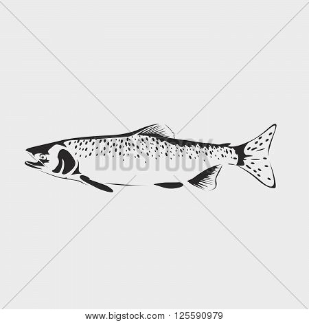 Vector Salmon Fish Isolated On White Background. Salmon Fish Icon