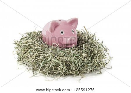 Old piggy bank in shredded paper money US dollar nest.
