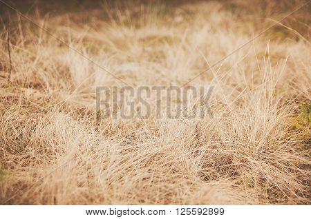 Dry brown withered grass in early spring in the forest