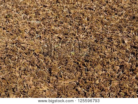 Millet drying in the sun in Nepal