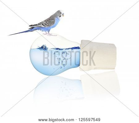 Little blue parrot sitting on light bulb isolated on white