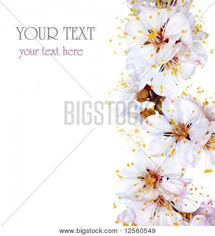 Spring flowers border with sample text