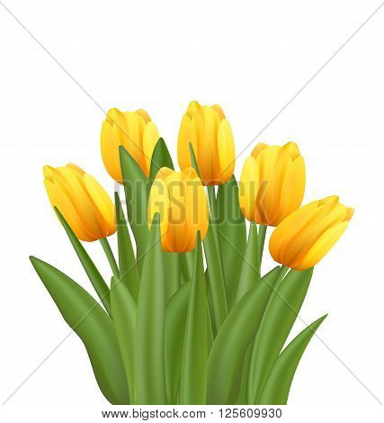 Illustration Beautiful Bouquet with Yellow Tulips Flowers Isolated on White Background - Vector