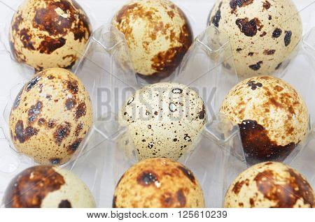 Quail Eggs In Plastic Container