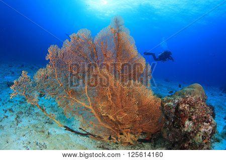 Scuba diving on coral reef in ocean
