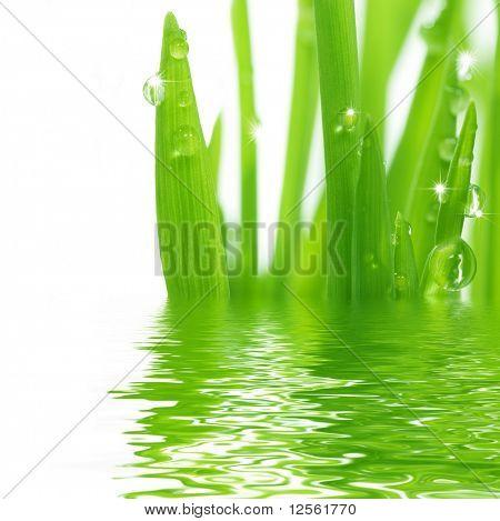 Hierba fresca