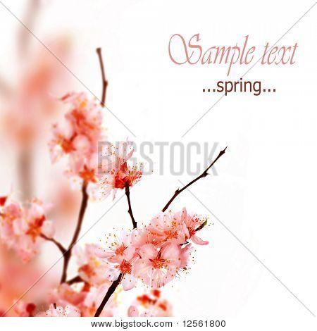 Frühjahr blühen