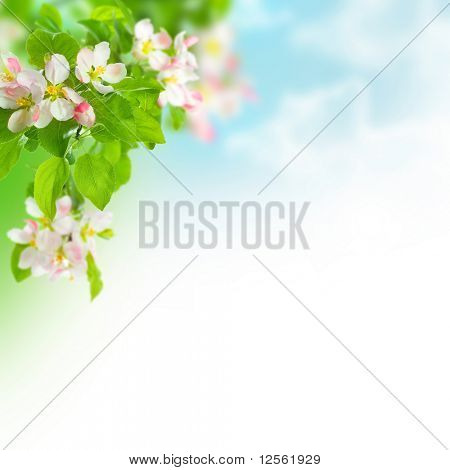 Spring Apple Blossoms Border