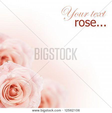 Borda suave rosas